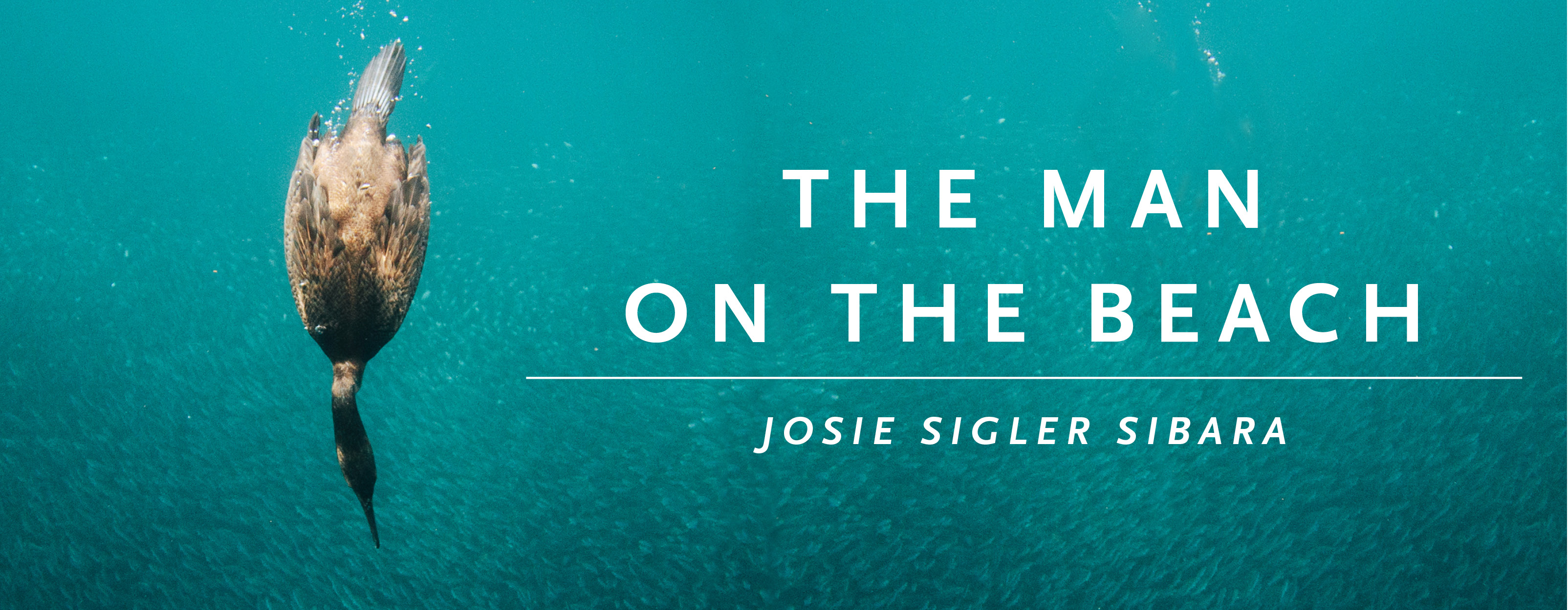 """Image of a duck diving down in water with the text """"The Man on the Beach by Josie Sigler Sibara"""""""